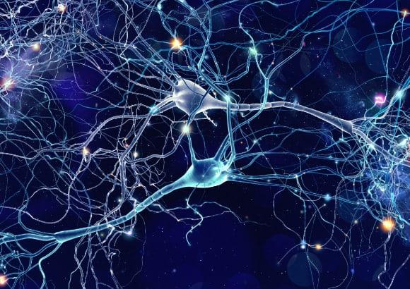 「なぜ人は挑戦できないのか?」神経科学から見た人材育成~ポリヴェーガル理論